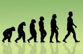 تطور الإنسان